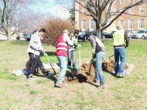 Casey Tree Planting